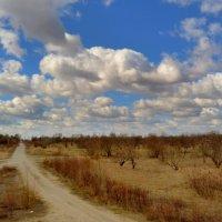 полевая дорога в марте :: Александр Прокудин