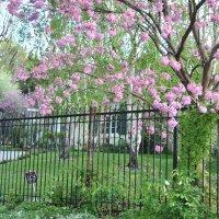 Весна :: Николай Танаев