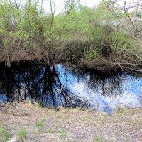Озерцо после разлива Десны :: Александр Скамо