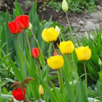 Пора тюльпанов...2 :: Тамара (st.tamara)