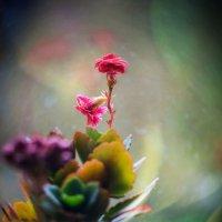 цветы на подоконнике... :: Александр Александр