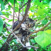 Что удивляешься, удобно мне...гнездо у меня здесь... ГНЕЗДО!!!))) :: Арина
