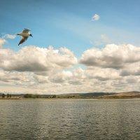 Полёт над озером. :: юрий Амосов