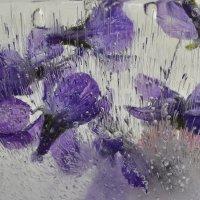 цветы во льду :: Olena
