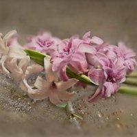 Брось цветок в мою душу- Услышишь таинственный всплеск... :: Людмила Богданова (Скачко)