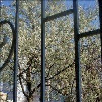 За окном расцвела алыча :: Нина Корешкова