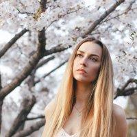 сакура цветет :: Ольга Фефелова