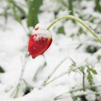 снегопад :: Юрий Удвуд