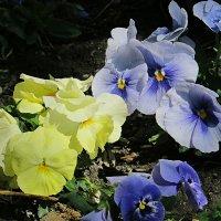 цветы на земле 2 :: Валерий Дворников