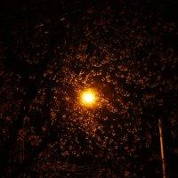 Ночь-время чудес. :: Ирина