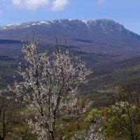 Весна. :: владимир Баранов