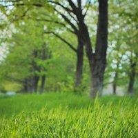 Зелёная, зелёная трава :: Ёжик в тумане