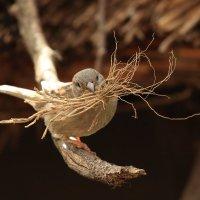 труженик. гнездо обещает быть тёплым. :: Naum