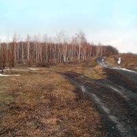 По дорожкам апреля.. :: Андрей Заломленков
