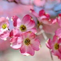Весенние цветы :: Марина Романова