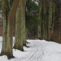 Дорогу в Изумрудный город засыпало снегом, печалька)) :: Вячеслав Криволуцкий