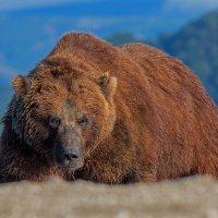 Медведь Гора :: Денис Будьков