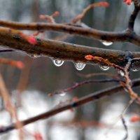 Мокрый апрель.. :: Андрей Заломленков