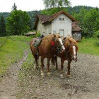 Лошади  для  туристов  в   Яремче :: Андрей  Васильевич Коляскин