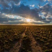 Навстречу солнца, или бескрайняя степная ширь. :: Фёдор. Лашков
