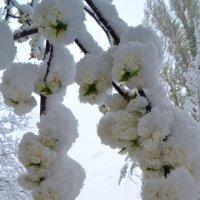 Белое в белом :: Nina Streapan