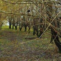 Весна :: Константин Бобинский