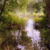 Круги на воде . :: Мила Бовкун