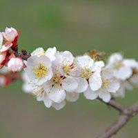 Кавказская весна :: Tanika Неделенко