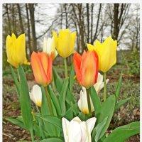 В цветах дыхание весны... :: Galina Dzubina