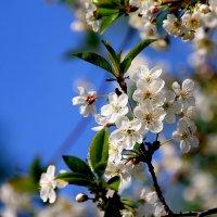 А весна так  и  снится.. :: Валерия  Полещикова