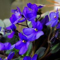 Весна на подоконнике :: Юрий