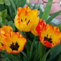 Мгновения весны :: Виктория Калицева