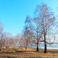 Утро у озера :: Владимир Звягин