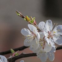 весна пришла :: Марина Ринкашикитока