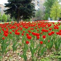 А у нас во дворе... :: Владимир Драгунский