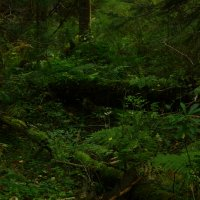 Лесные пороги :: Алексей Коган