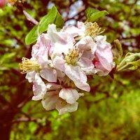 и всё-таки весна! :: Ольга Богачёва