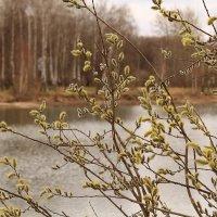 Ивушка над озером :: Татьяна Ломтева