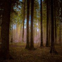 В весеннем лесу :: Ириника