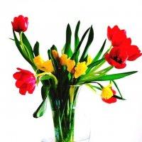 Тюльпаны :: Марина Романова