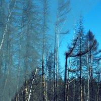 Из подгрязного лобового стекла :: Виктория Большагина