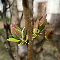 Весна идет..Весне дорогу! :: Елена Семигина