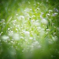 люблю,когда всё цветёт :: Полина Дюкарева
