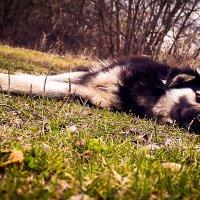 собака-лучший друг. :: Ирина