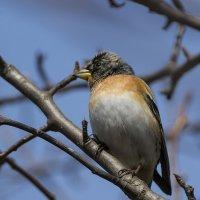 Про птичек.. :: Subway S