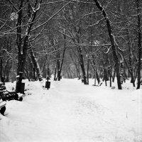 Парк :: Николай Федоров