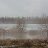 туман :: Оксана К