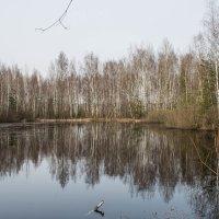 озеро в лесу :: Ольга (Кошкотень) Медведева