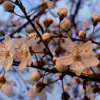 Весна. :: Антонина Гугаева