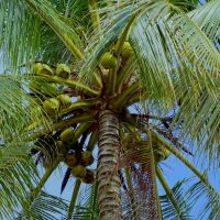 Где - то  там кокосовый  рай... :: Elena Izotova